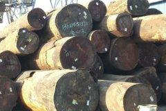 东南亚原木/木材进口报关―博裕进口物流